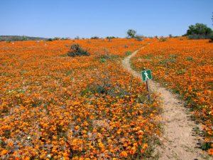 Namaqualand, Südafrika